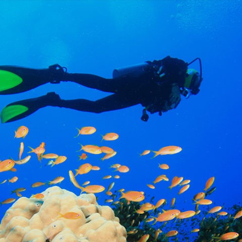 Diving in Kassandra